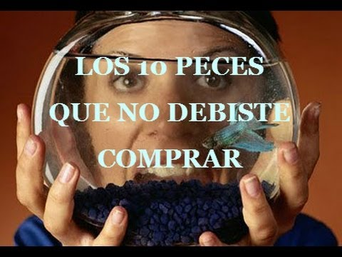 Los 10 peces que nunca debiste comprar / 10 fish you should