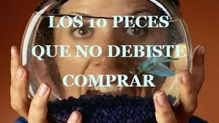 getlinkyoutube.com-Los 10 peces que nunca debiste comprar / 10 fish you should never buy