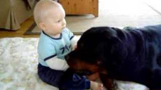 getlinkyoutube.com-Gibson is gone 1/7-08,R.I.P, Rottweiler&baby the real side of Rottweilers friendlines