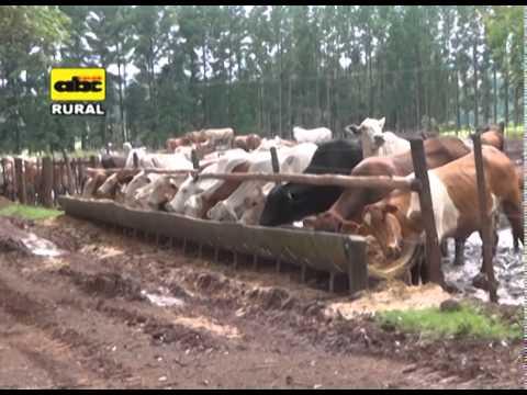 Confinamiento y terminación de ganado de carne
