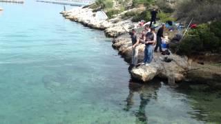getlinkyoutube.com-Per Peshkim Oktapodi ne Ishullin e Salamines Greqi 2