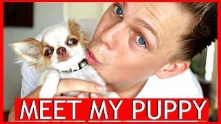 MEET MY PUPPY - CASPAR LEE