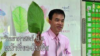 getlinkyoutube.com-วิทยาศาสตร์ ป.4 หน้าที่ของใบพืช ครูเฉลิมชัย วัดเข้าหลาม