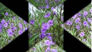 getlinkyoutube.com-ครูแสง : เรียนลัดถ่ายภาพ 9 ถ่ายภาพดอกไม้ไทย - Thai Flowers Movie 3
