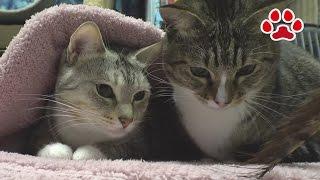 getlinkyoutube.com-Cat's room Miaou November 29, 2016