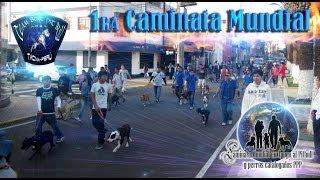 getlinkyoutube.com-1ra CAMINATA MUNDIAL Team Best Pit Bull (Tacna - Perú) APBT TBPB