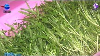 เกษตรสร้างชาติ : ต้นอ่อนผักบุ้ง สด อร่อย ดีต่อสุขภาพ