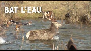 getlinkyoutube.com-Bat l'eau : cerf poursuivi par les chiens - Hunting Deer with dogs - subscribe !