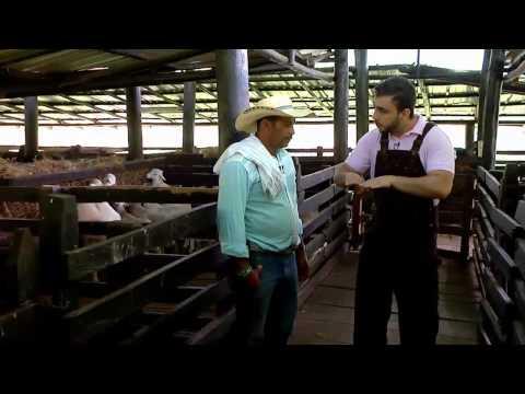 Escuela de Campo: Sistemas de producción de ovejas - 25 de julio