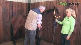 How to clip a horse for the show ring