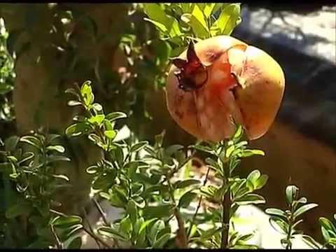 Produção de plantas ornamentais - 09/08/2014