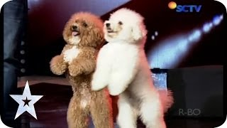 getlinkyoutube.com-Such a Lovely Dog Acrobatic - Lovly Dog - AUDITION 5 - Indonesia's Got Talent