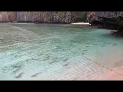 Сотни акул захватили знаменитый пляж, где снимался Ди Каприо