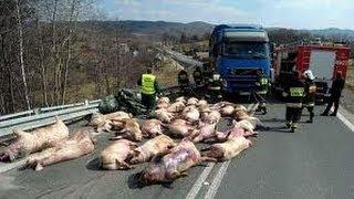 getlinkyoutube.com-Over 50 accident truck compilation 2013