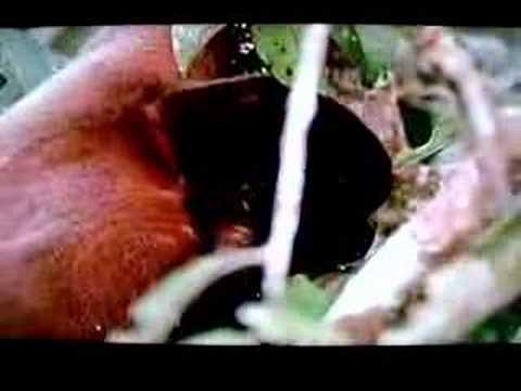 vida salvaje selva amazonica