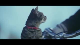 "getlinkyoutube.com-""ร้องไห้หนักมาก อย่าให้แมวตัวนั้นต้องหายไป""  กระแส If Cats Disappeared From The World"