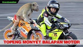 Topeng monyet lucu, monyet balapan motor. funny monkey