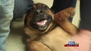 getlinkyoutube.com-Dog lost for six months reunited with owners