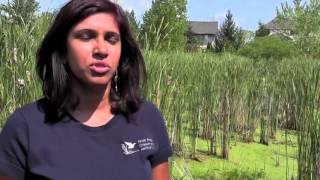 getlinkyoutube.com-Overload - Lake Erie Blue Green Algae:  Problems & Solutions