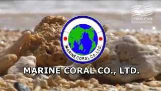 getlinkyoutube.com-Coral Mine polski
