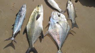 getlinkyoutube.com-شرح صيد السمك بالطعم الصناعي (الراغلو) + الحصيلة (HD)