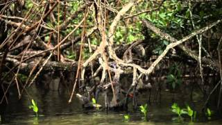 Sinema Papua: Mutiara Hitam Part 1