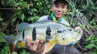 getlinkyoutube.com-Helve Part 3: Peacock Bass พีค๊อกแบส