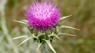 getlinkyoutube.com-أعشاب منشطة جنسياً للرجال والسيدات | طب الأعشاب