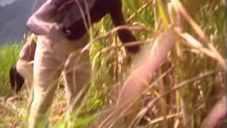 getlinkyoutube.com-Slavery in Jamaica, Part 1