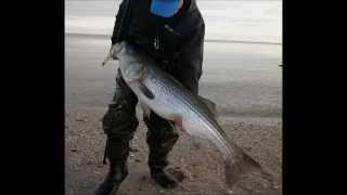 getlinkyoutube.com-Surfcasting for Stripers - 33-pounder on a Pencil Popper