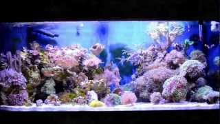 getlinkyoutube.com-Coral Reef Fish Aquarium 75 Gallon HD Saltwater Tank