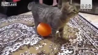 getlinkyoutube.com-[유준호 더빙] 고양이에게 드래곤볼을 줘보았다