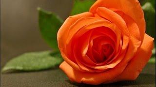 getlinkyoutube.com-BEAUTIFUL ROSES FOR YOU ❤