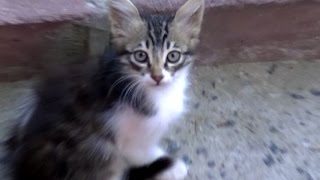 getlinkyoutube.com-猫と仲良くなる方法・裏技を使って野良猫に目薬をさす!(NNNですよ~)