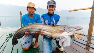 getlinkyoutube.com-ล่าปลาค้าว 15 กิโล ที่เขื่อนเขาแหลม by fishingEZ