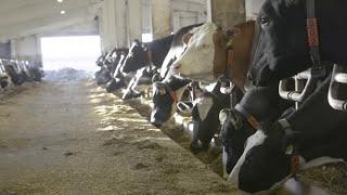 getlinkyoutube.com-Ein Stall zieht um - Vom LPG-Stall zum modernen Melkzentrum