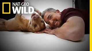 getlinkyoutube.com-Daddy's History | Cesar Millan: Love My Pitbull