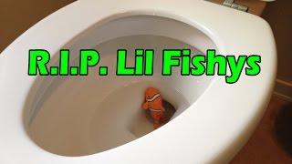 getlinkyoutube.com-Lil Fishys - ALERT - WATCH BEFORE YOU BUY!!!!!!!!!!!!