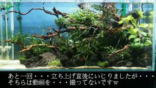 getlinkyoutube.com-90水槽立ち上げ動画 Vol.6「立ち上げ後の調整」