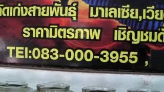 getlinkyoutube.com-ปลากัดเก่ง สำนักปลาบิน@จตุจักร