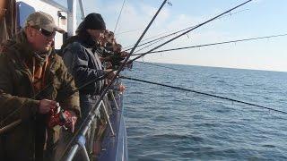 getlinkyoutube.com-Dorschangeln: Anglerboard Boardie-Kuttertour auf der MS Antares