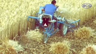 getlinkyoutube.com-BCS 3 Wheel Reaper Binder Wheat Harvesting Solution