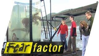 getlinkyoutube.com-Crayfish Tank  | Fear Factor Extra