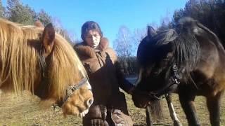 Лошади в деревне. Кормление, содержание и выбор лошади.