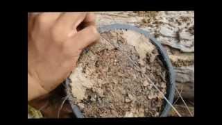 getlinkyoutube.com-การปลูกพืชกลับหัว
