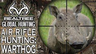 getlinkyoutube.com-Benjamin Bulldog Big Bore Air Rifle Hunting in South Africa: Warthog