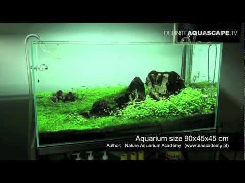 Aquascape - Planted tank 90x45x45 (iwagumi)