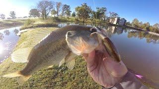 getlinkyoutube.com-Fish Crushed It!