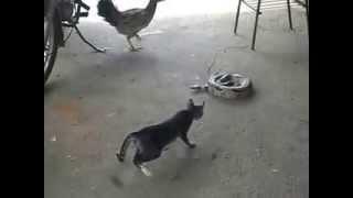 getlinkyoutube.com-Gato assusta e pula encima da cobra