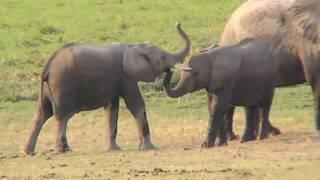 getlinkyoutube.com-Wings over Kenya, an African Safari (2007)